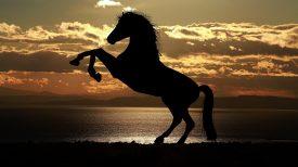 horse-1804425_1920